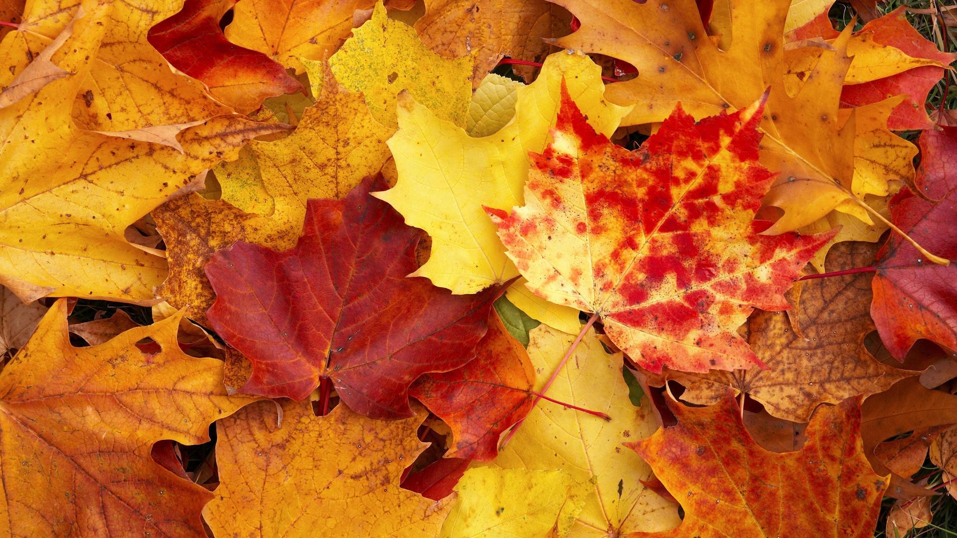 Gli eventi ad ottobre al porto antico di genova for Sfondi autunno hd
